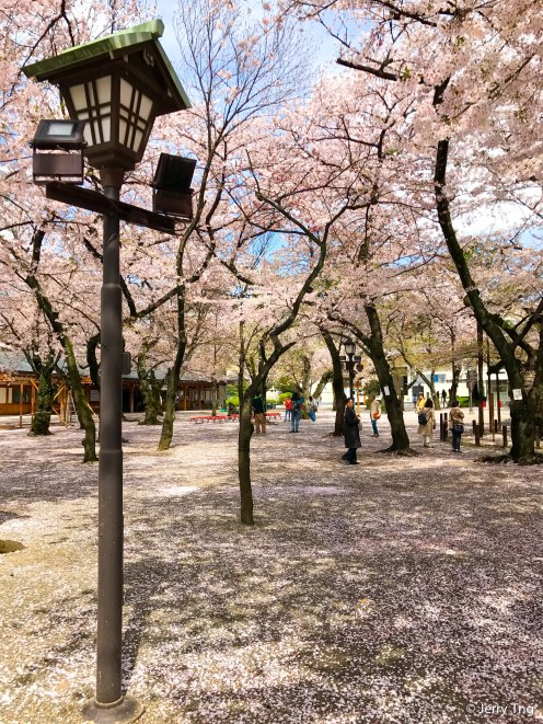 Cherry Trees after the Second Gate