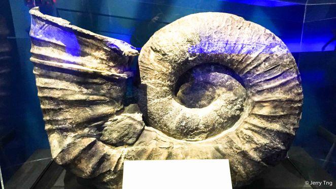 Fossilised Shell