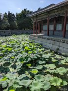 L2M-CN-1907-SUMMERPALACE-77