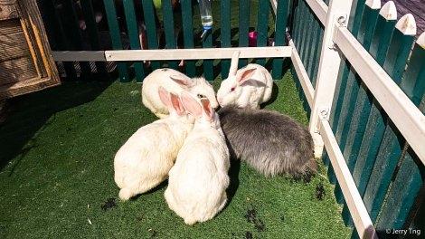 Fat bunnies