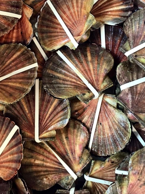 Hand dived scallops from port phillip bay from Bruce Colis