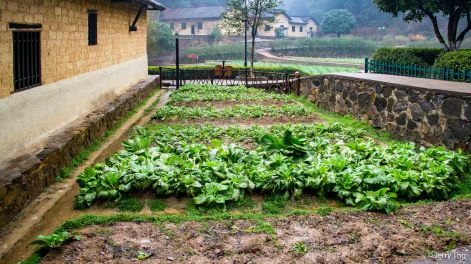 Their own family vegetable patch