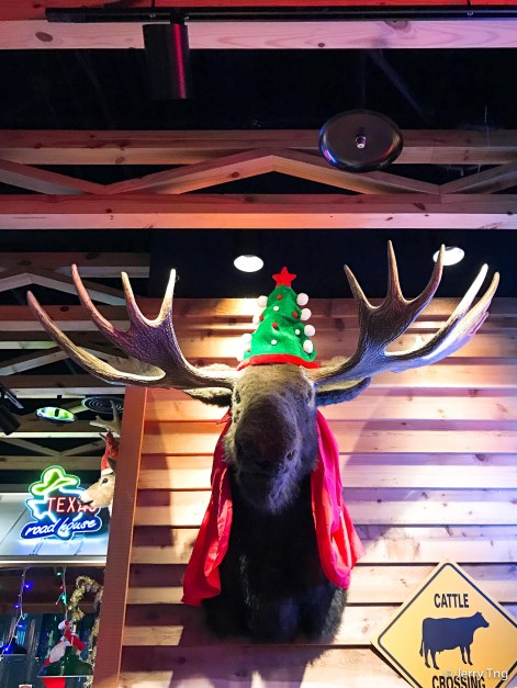 Moose in Texan country